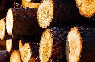 本物の木材